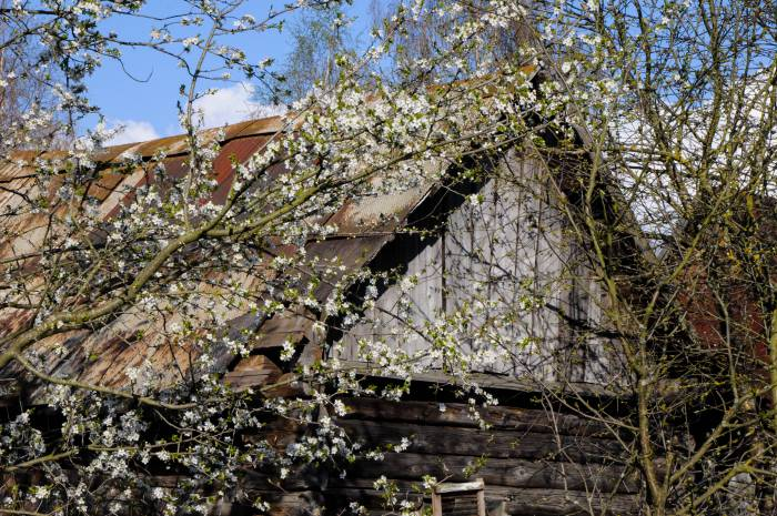 Цветение садов в деревне - роскошное зрелище. Фото Анастасии Вереск