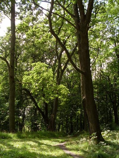 """Парк """"Бельмонты"""". Фото forum.globys.tut.by"""
