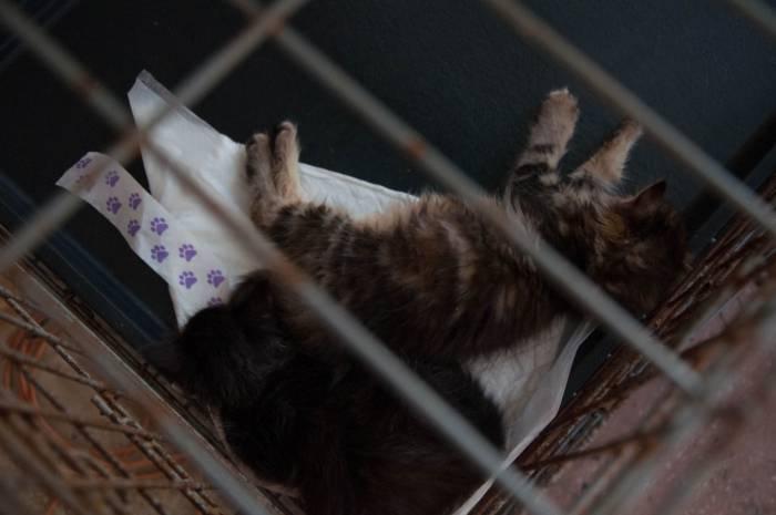 Котята быстро устали от повышенного внимания. Фото Анастасии Вереск