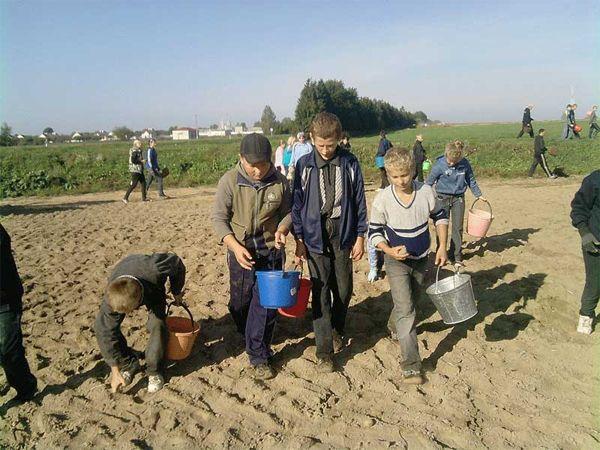 сельская школа, ученики в колхозе