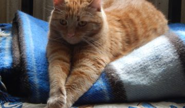 кошка юля, кот, тепло, холодные батареи