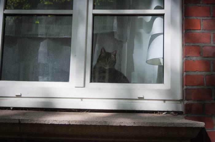 За время нашего пребывания в Гамбурге мы не видели ни одного бездомного животного. А это единственный кот, встреченный нами на просторах города. Фото Анастасии Вереск
