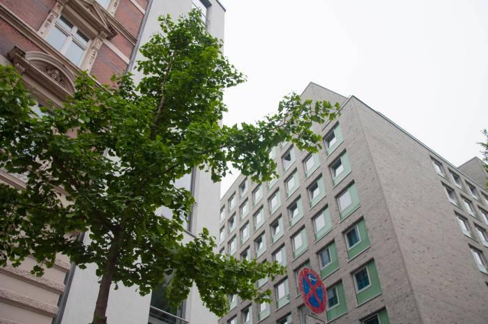 Реликтовое дерево гинкго на улице в Гамбурге. Фото Анастасии Вереск
