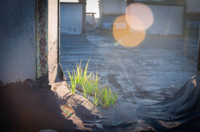 Крыша приближает живое к солнцу. Фото Анастасии Вереск