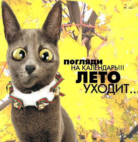 Фото archive.diary.ru