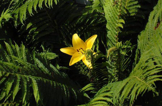 А вы видели, как цветет папоротник? Фото Саши Май