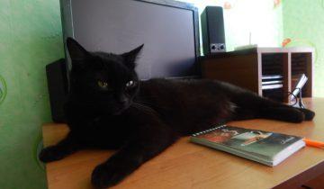 кошка, компьютер
