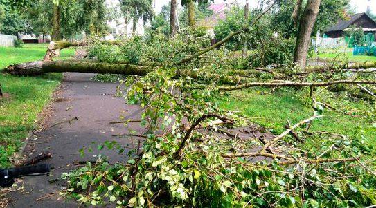 Последствия стихии в Гродно. Источник фото: соцсети