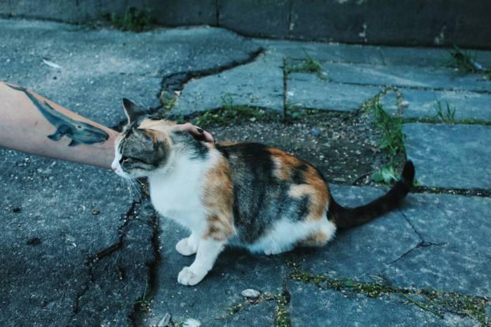 Бродячая кошка