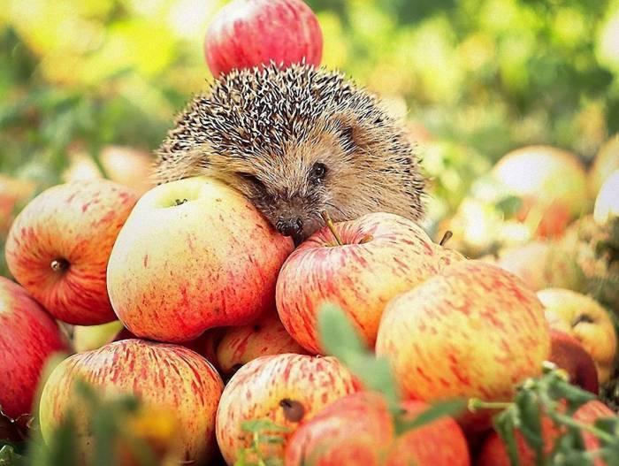 Яблочный Спас: что нужно делать, а что нельзя