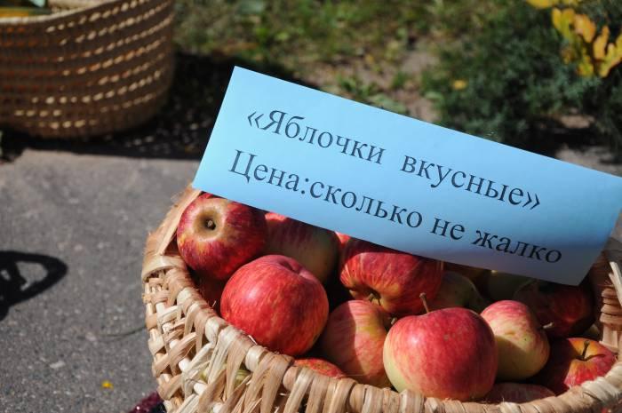 Яблок в этом году - завались. Фото Анастасии Вереск