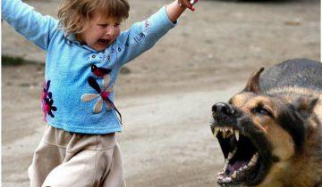 Бродячие собаки нападают на детей. Фото lotosgtrk.ru
