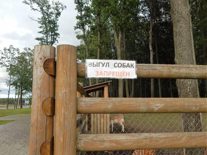 выгул собак, зоопарк в Билево