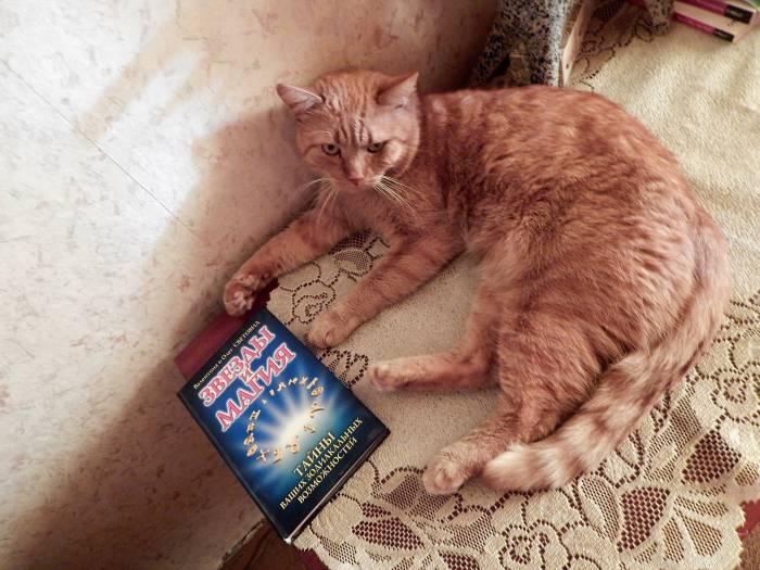 кот, гороскоп