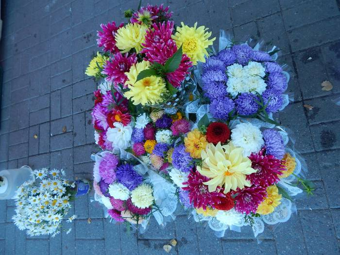 цветы, 1 сентября