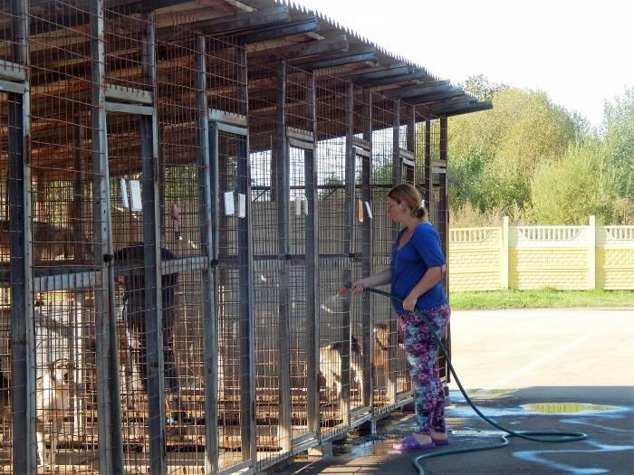 приют для безнадзорных животных, витебск