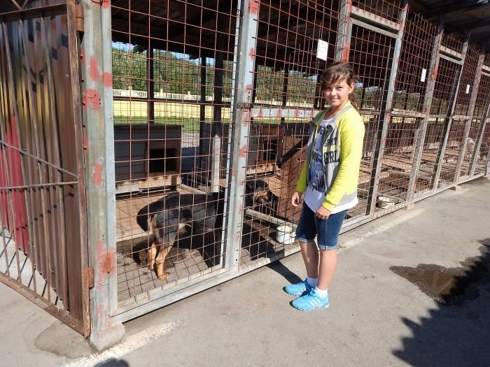 витебский приют для безнадзорных животных