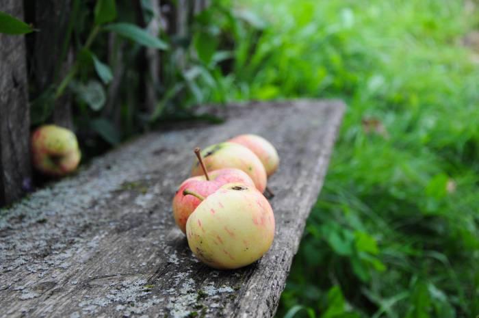 Яблочко хочешь? Фото Анастасии Вереск