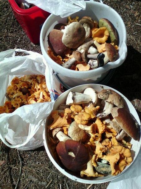 Грибов много не бывает, а хороших грибов тем более. Фото из соцсетей
