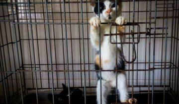 котята в приюте