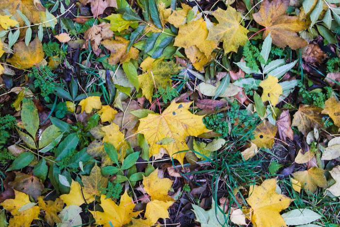 Осень - она такая, разноцветная, но с холодным секретом внутри. Фото Анастасии Вереск