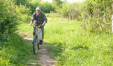 лес, велосипед, грибы