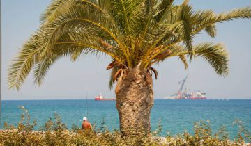 Солнце, море, пальмы. Фото Анастасии Вереск