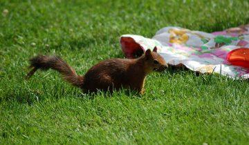 squirrel-1470998_640