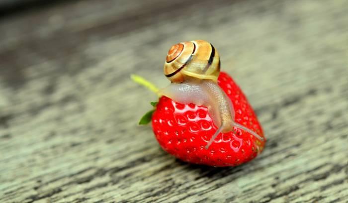 strawberry-snail-tape-worm-animal