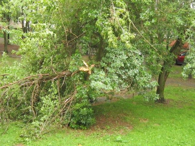 Поднявшийся ветер даже сломал несколько деревьев. Фото из соцсетей