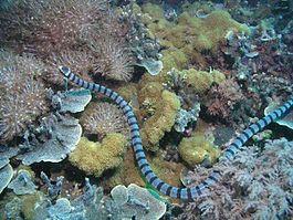 Белчера Фото: wikipedia.org