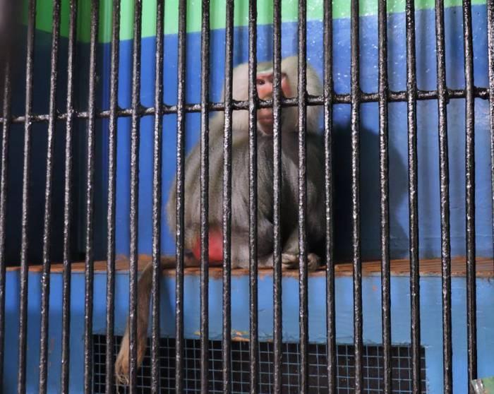 передвижной зоопарк в витебске, обезьяны