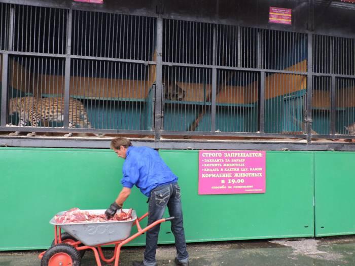 передвижной зоопарк в витебске, хищники, кормление животных
