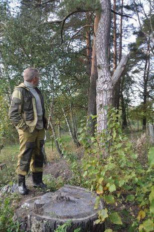 Яркий пример: сухое дерево стоит как стояло, а от молодого остался один пень. Фото Анастасии Вереск