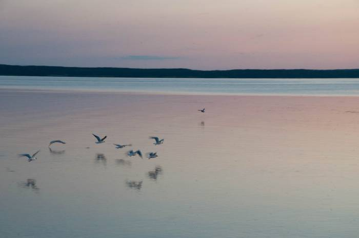 Чаще всего на озере можно увидеть, конечно же, чаек. Фото Анастасии Вереск