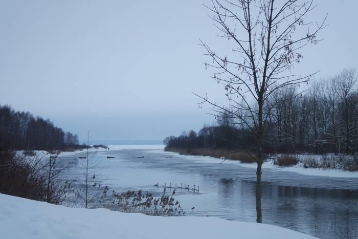 Лебеди на канале. Фото Анастасии Вереск