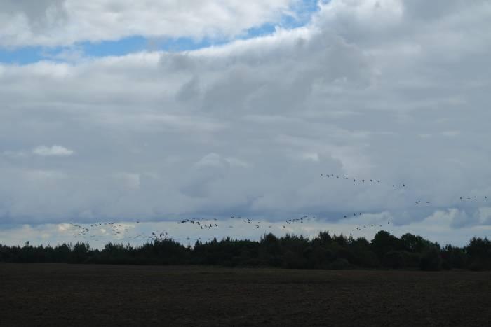 Мы возвращаемся с экскурсии, а где-то вдали летят журавли. Фото Александры Мирной