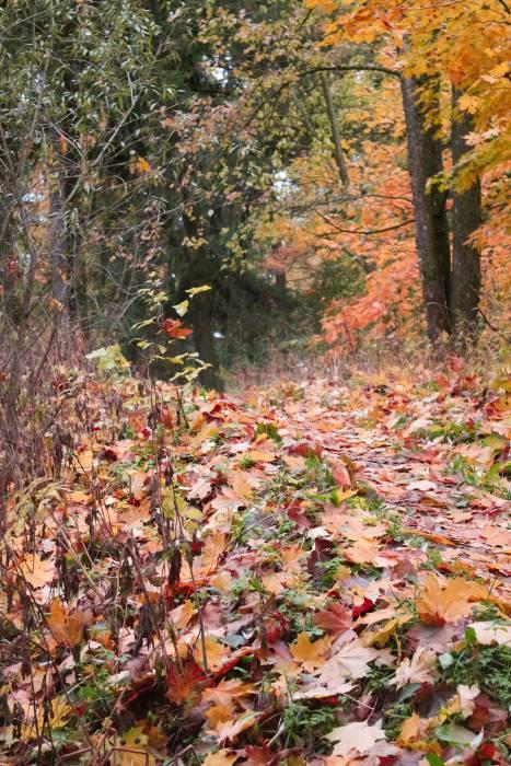 Парк осенью. Фото Анастасии Вереск
