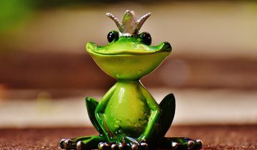 frog-1591896_640