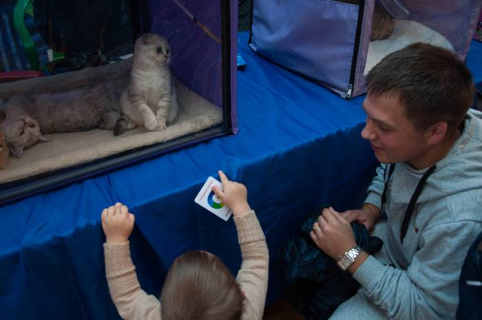 Смотри, какой кот! Фото Анастасии Вереск