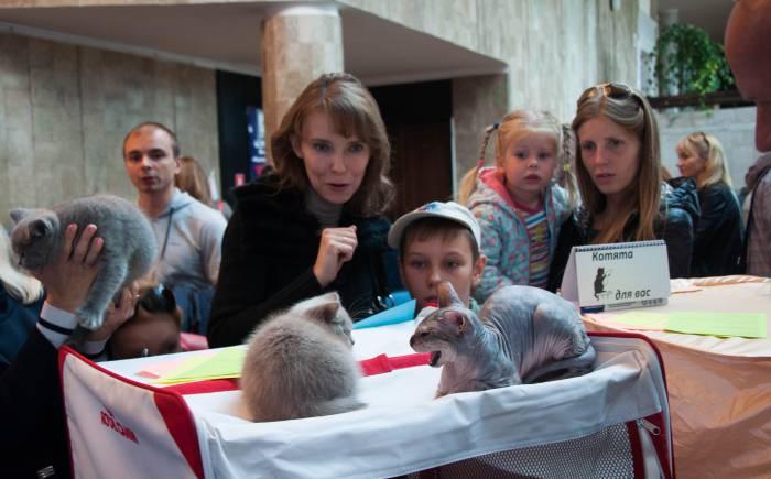 Котята вызывают восторг. Фото Анастасии Вереск