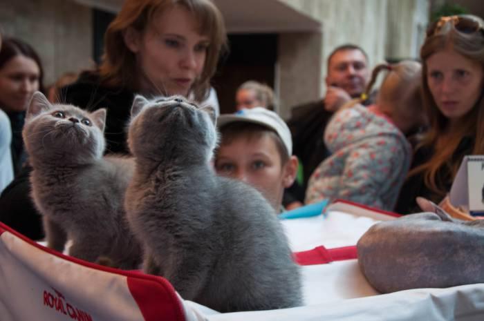 Котята не оставляют вам ни единого шанса прийти на выставку и не умилиться. Фото Анастасии Вереск