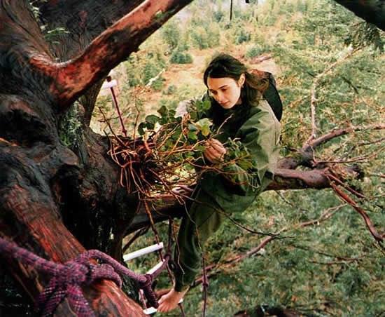 Жизнь на гигантском дереве. Источник: соц.сети