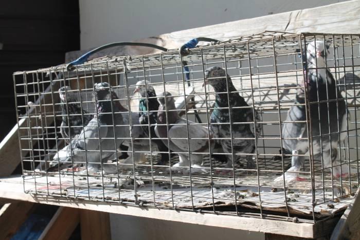 птицы, птушыны сход, витебск