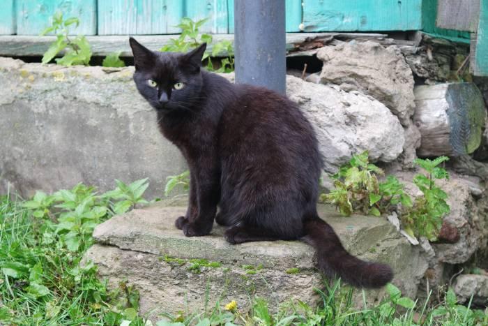Любимый черный кот может стать главным героем праздника в вашем доме. Фото Анастасии Вереск
