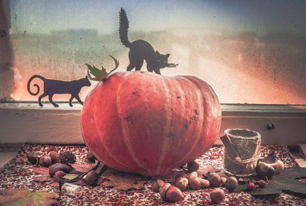 Хеллоуин - время тыкв, ведьм и страшных историй. Фото Анастасии Вереск
