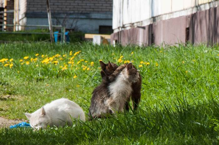 Животным нужна наша любовь. Фото Анастасии Вереск
