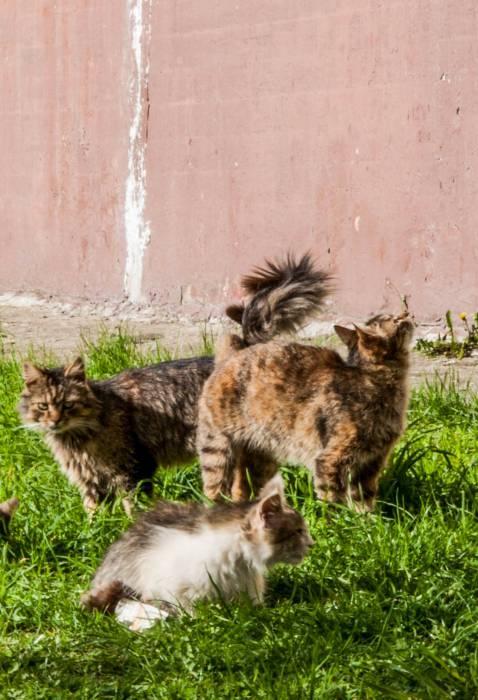 Законопроекту Об обращении с животными нужна поддержка. Фото Анастасии Вереск