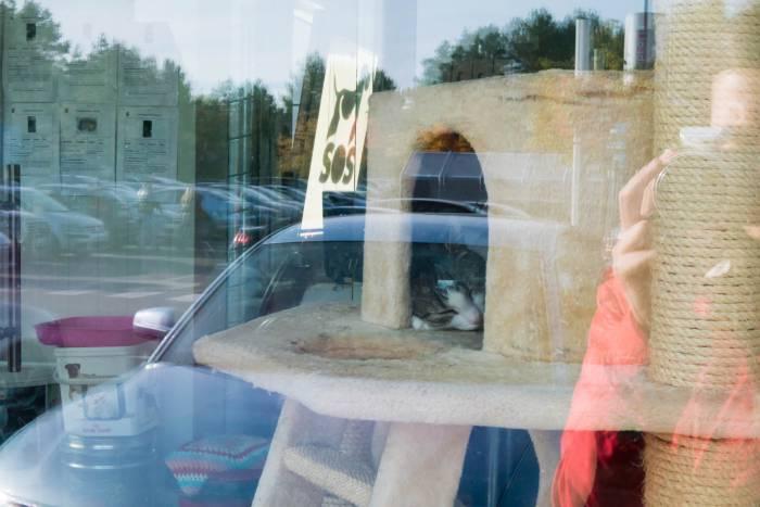 В открытом павильоне живут самые спокойные кошки. Фото Анастасии Вереск