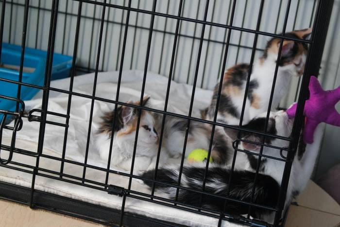 Детки в клетке не унывают. Фото Анастасии Вереск